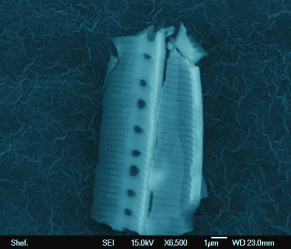 This image shows a diatom frustule, possibly a Nitzschia species, captured on a stud from a height of 25 km in the stratosphere. Image credit: Milton Wainwright et al.