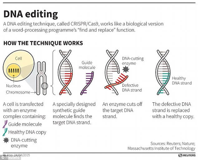 The Crispr-Cas9 technqiue uses tags, which identify the location of the mutation, and an enzyme, which acts as tiny scissors, to cut DNA in a precise place, allowing small portions of a gene to be removed